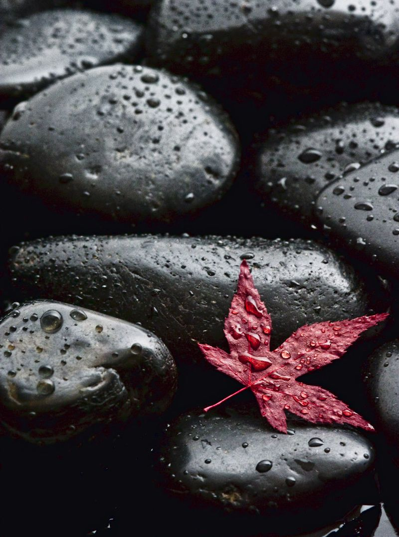 A-Color-Red Leaf on Stones-47